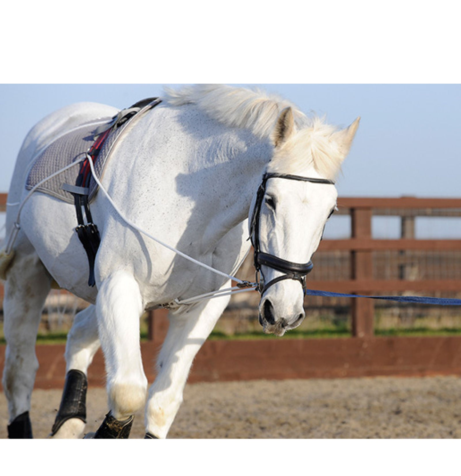 pessoa lunging system instructions