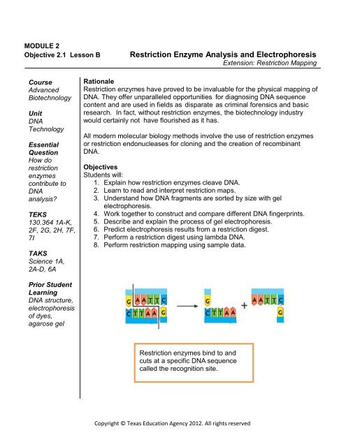 restriction enzymes pdf
