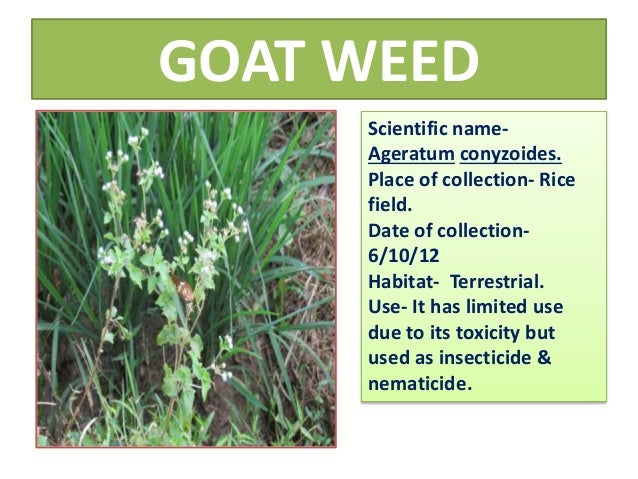 pictures of weeds and their scientific names pdf